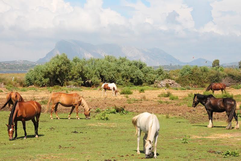 Urlaub auf Sardinien: Vielfältige Natur auf der italienischen Insel