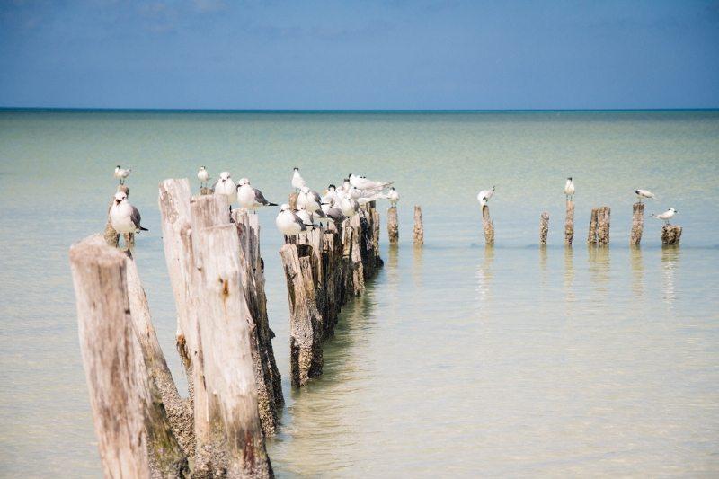 Vogelparadies Isla Holbox
