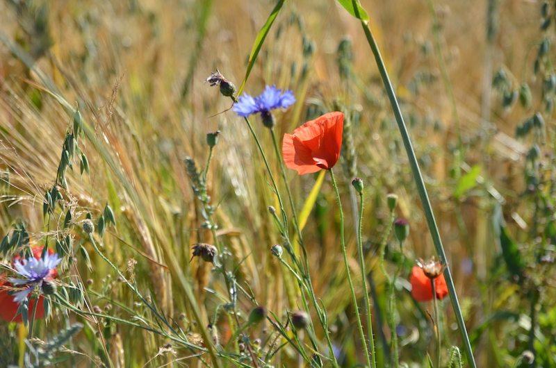 Blumen des Sommers