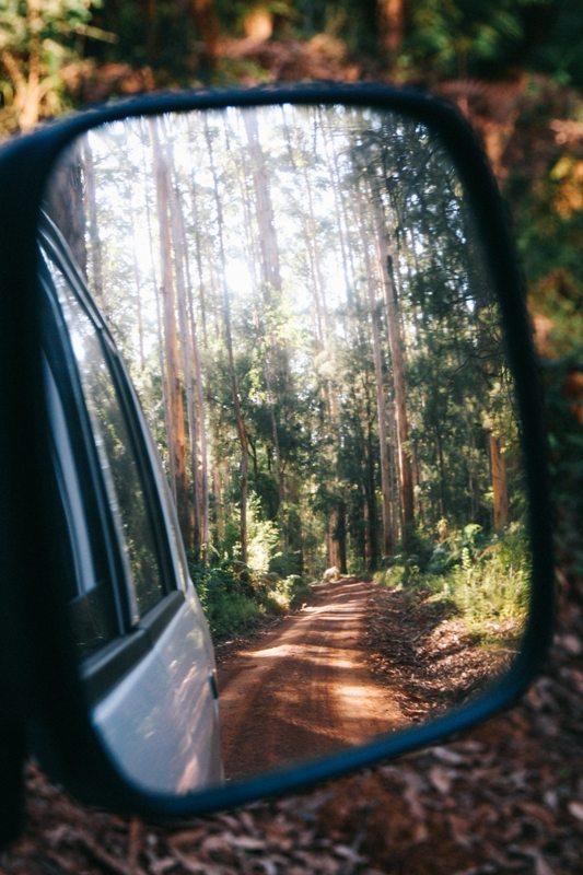 Westaustralien-Route: Karri Wälder bei Margarete River