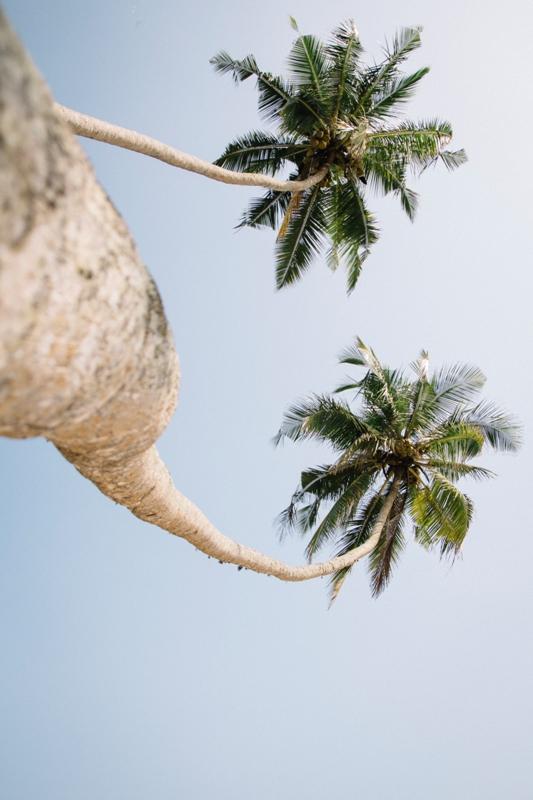 Palmen über Palmen im Süden von Sri Lanka