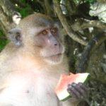 Auf der Monkey Island schlemmt man