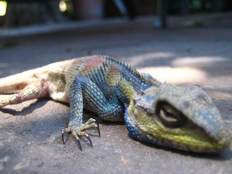 Auf einer Thailand Rundreise begegnet man immer wieder exotischen Tieren