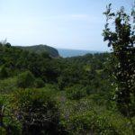 Die schönste Insel Thailands ist sehr grün