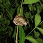Ein Froschi im Regendwald
