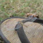 Eine Libelle am Stausee