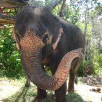 Elefantenreiten kann man an vielen Orten in Thailand