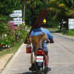 Rollerfahren in Thailand