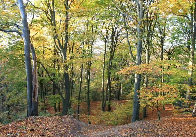 Hamburg im Herbst: Natur im Viertel Blankenese