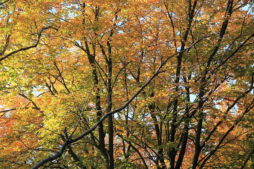 Hamburg im Herbst