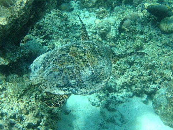 Tollste Unterwasserbilder mit iDry-Hülle - Foto mit dem Iphone 4S geschossen