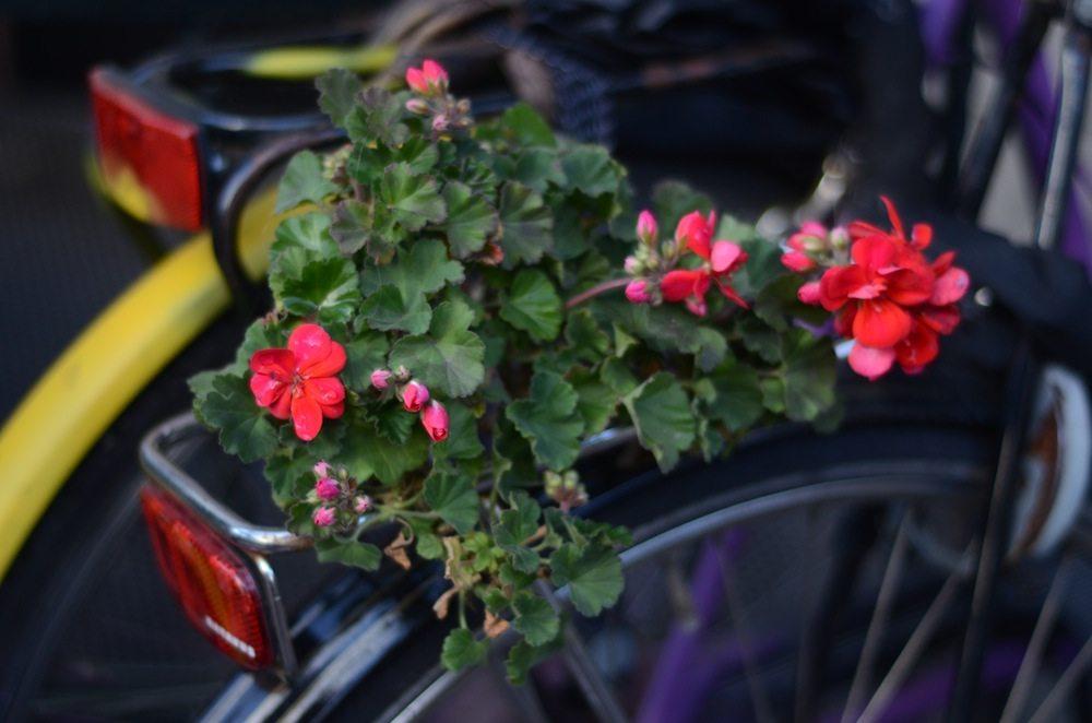 Das geliebte Fahrrad des Amsterdamers wird gepimpt