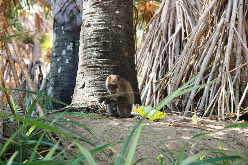 Dschungeltour - Affen im Nationalpark auf Koh Lanta, Thailand