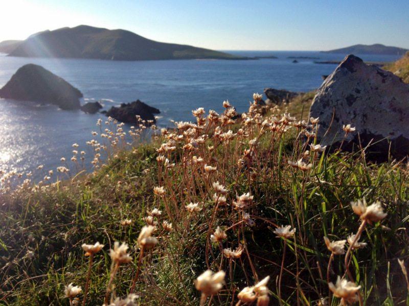 Dingle Halbinsel in Irland - Reisetipp für den Sommer