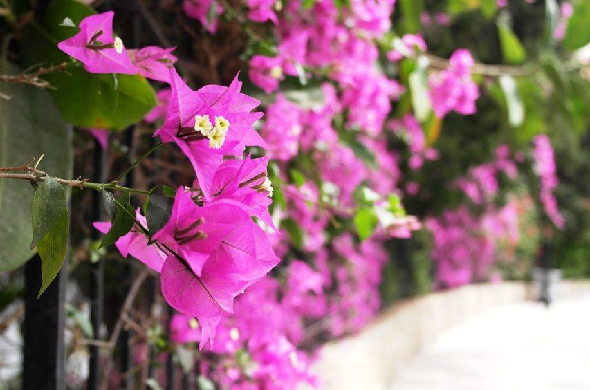 Bunte Blumen auf Mallorca