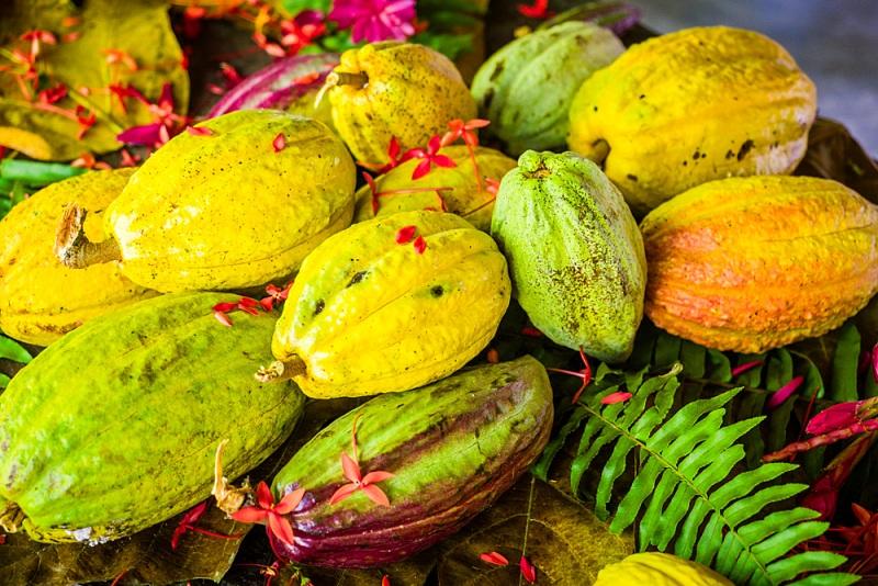 Sehenswürdigkeiten Kuba Rundreise - Highlight Kakao in Baracoa