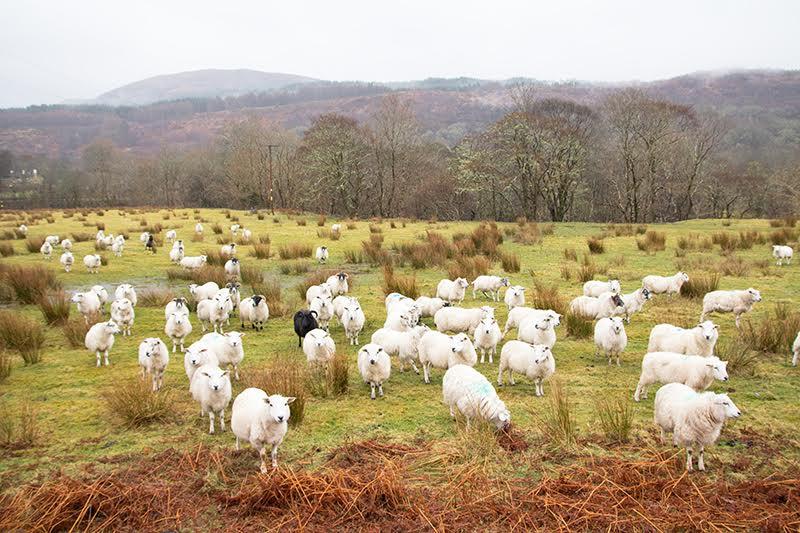 Eine Mietwgenrundreise durch Schottland heißt: Natur pur - Luror