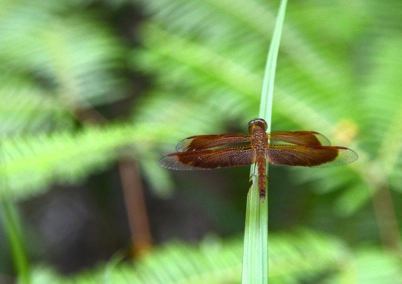 Auf Entdeckungstour durch den Urwald auf Koh Tarutao
