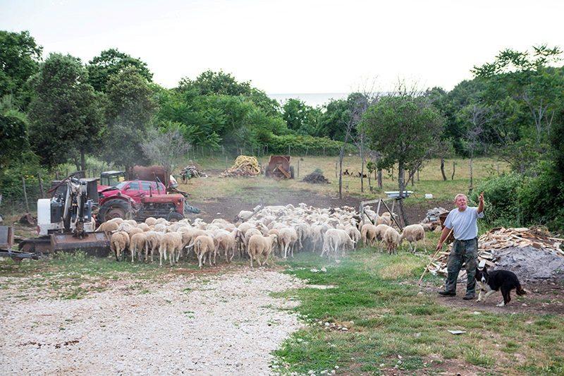 Agriturismo im Kap Kamenjak in Istrien - Kroatien