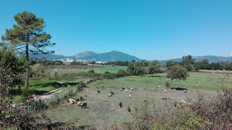 Backpacking Korsika: Mit dem Fahrrad an der Westkueste von Porticcio