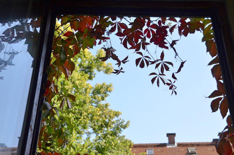 Weinranken - Ein bisschen Romantik vorm Fenster