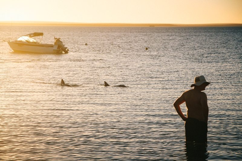Delfine in Monkey Mia Westaustralien Norden Shark Bay