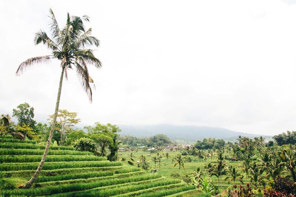 Jatiluwih Reisterrassen in Nordbali - Geheimtipp für eure Bali Backpacking Route
