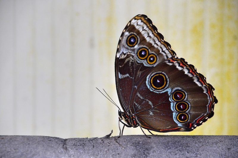 reisefotografie Tipps: Makroaufnahmen vom Schmetterling