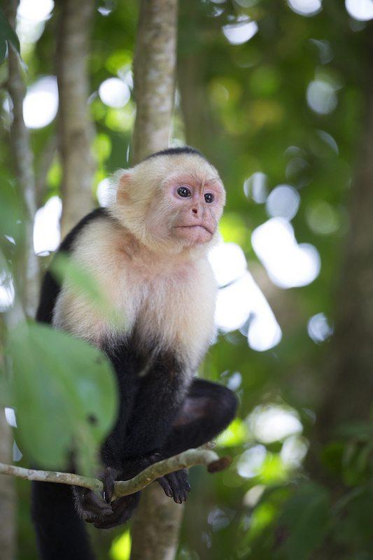 Ticotrotter unterstützt nachhaltiges Reisen in Costa Rica und empfiehlt die Natur zu respektieren