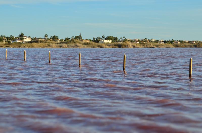 Bild schöner als in der Realität: Der Pinke Salzsee von Torrevieja war lasch rosa und ist für mich somit nicht unbedingt ein Tipp für Costa Blanca