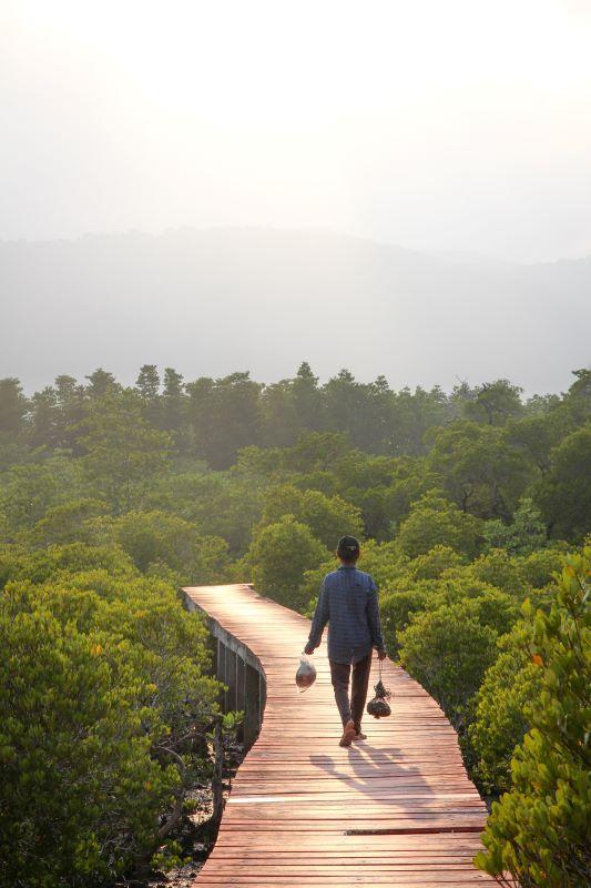 Koh Chang Empfehlung Mangroven Ostküste