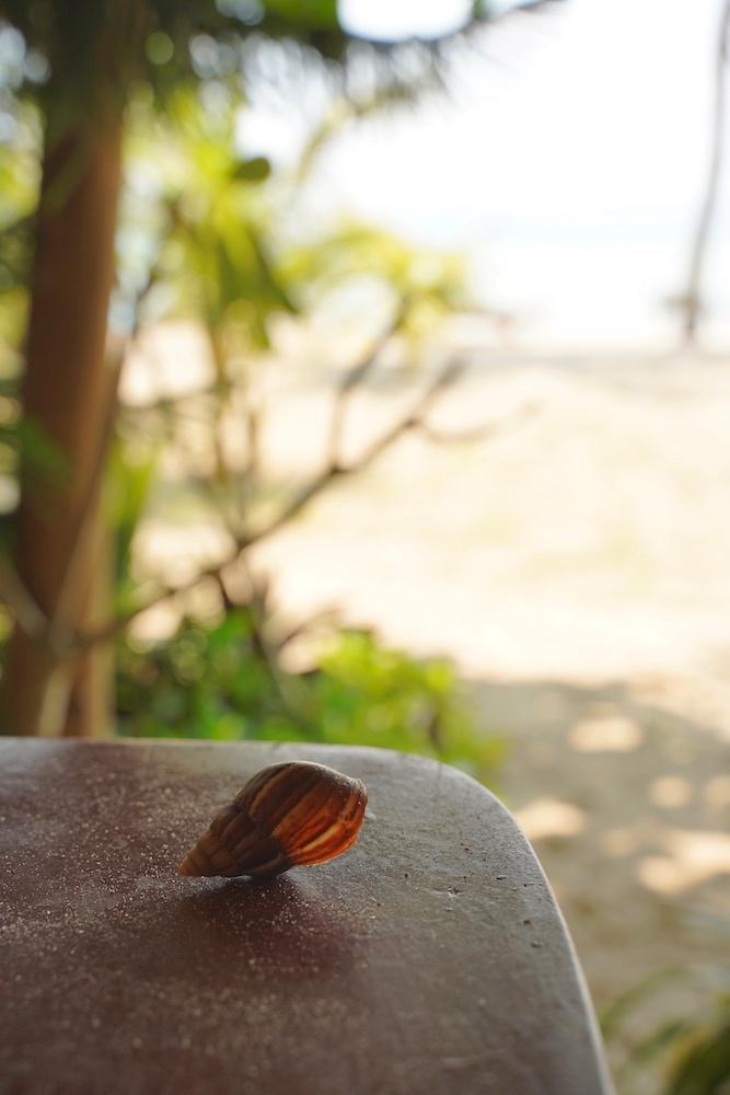 Bungalow am Strand gesucht - auf Koh Phangan am Baan Tai gefunden