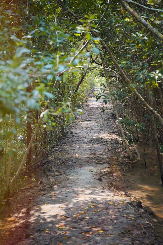 Allein im Mangrovenwald des Mu Ko Chumphon Nationalparks in Thailand